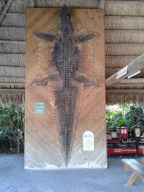 Florida - gator farm - big one