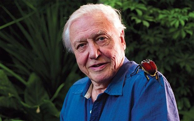 Sir David Attenborough has spoken out against an extension of the badger cull in Gloucestershire.  And, that is NOT a parrot on his shoulder!