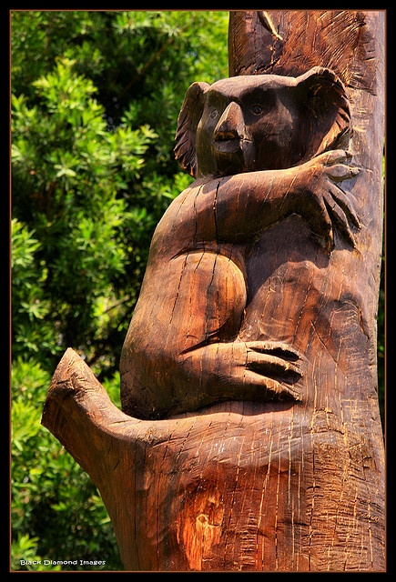 Koalas wood carvings and carving on pinterest