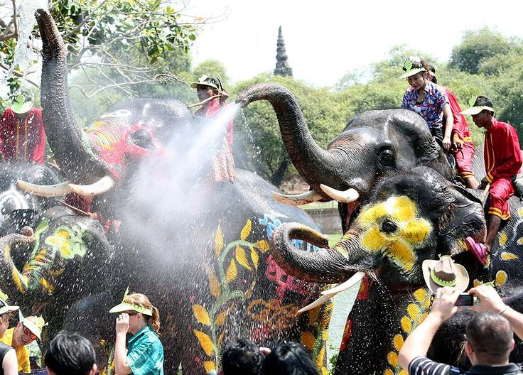 Ayutthaya, Thailand — Elephants splash water to celebrate Songkran or the Thai traditional New Year festival, in the ancient city of Ayutthaya. The annual elephant Songkran is held to promote the tourism industry and is celebrated prior to the three-day Songkran Festival also known as the water festival, which is held from April 13-15.  PHOTOGRAPH BY: NARONG SANGNAK / EPA