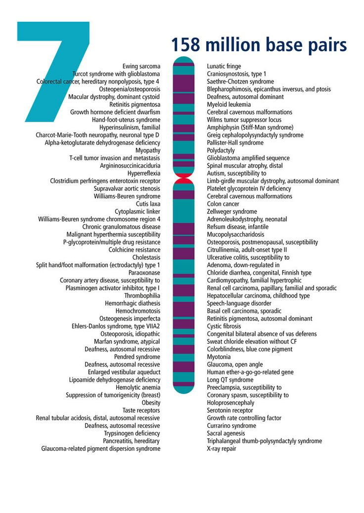 Chromosome (With images) Chromosome, Human genome