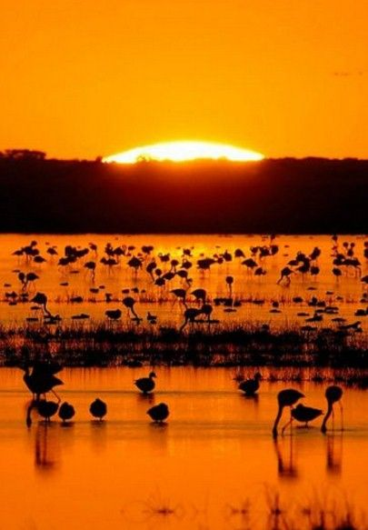 Doñana National Park, a UNESCO World Heritage Site since 1994. Andalusia, Spain