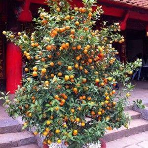 Vous rêvez de récolter de délicieux abricots sur votre balcon ou votre terrasse? Rien de plus simple: découvrez comment cultiver un abricotier en pot.