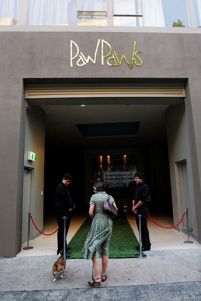 Guests arrive on the green carpet at PawPaws Urban Retreat, a newly opened hotel for dogs in Waterloo on January 28, 2009 in Sydney, Austral...