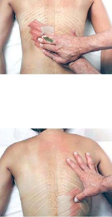 Basic Clinical Massage Therapy - Serratus Posterior Inferior