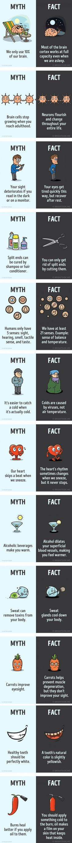 12 myths about the human body that we should forget