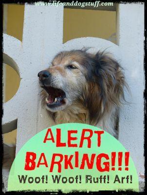 New blog post - Alert Barking! Woof! Woof! Ruff! Arf! Buffy, Fluffy and Snowy discuss alert barking. #humor #dogs