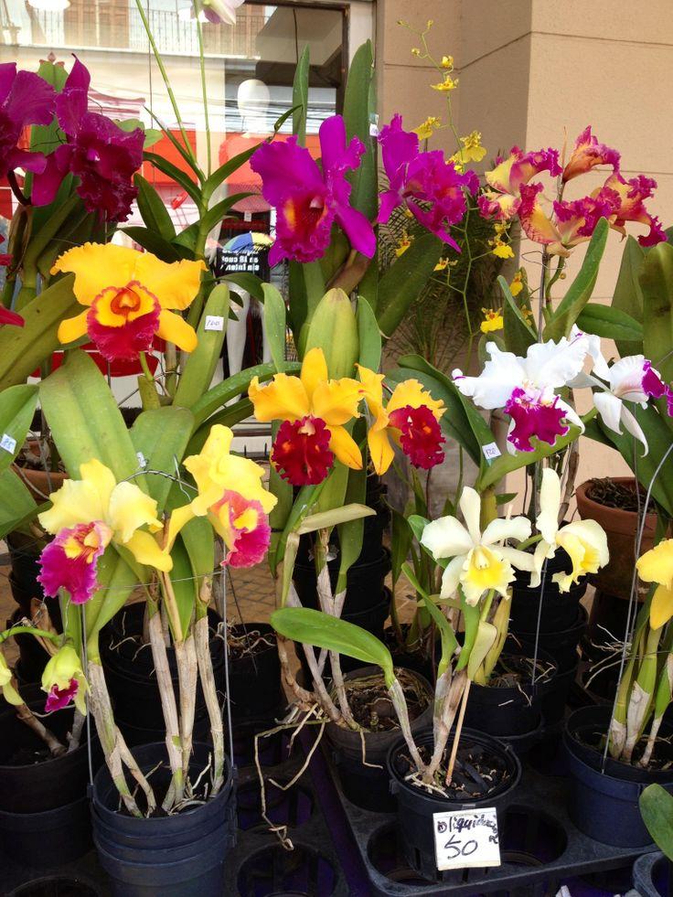 Orquídeas de Paraguay