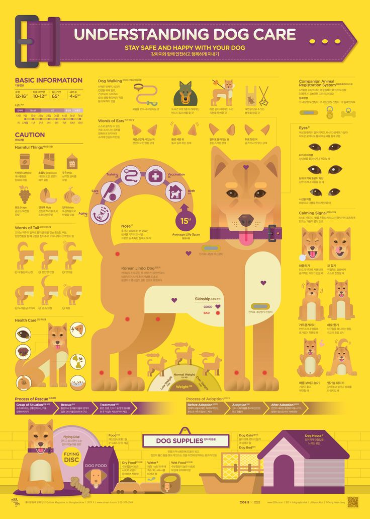 22++ Wag dog walker resume Resume Examples