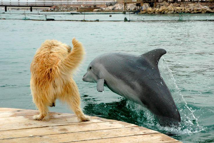 Дельфин и собака - удивительная дружба! (видео) » Женский Мир
