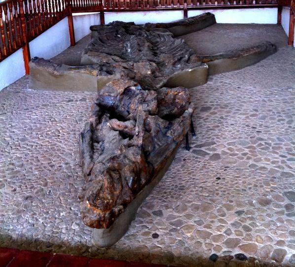 Museo El Fósil