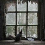 Una casa abandonada en Finlandia es habitada por animales