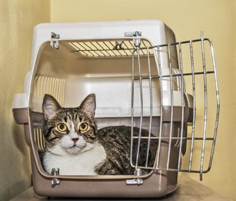 Crate training a cat doesn't have to be difficult. Here are tips on choosing a crate, training your cat and other ways to make the crate a happy place.