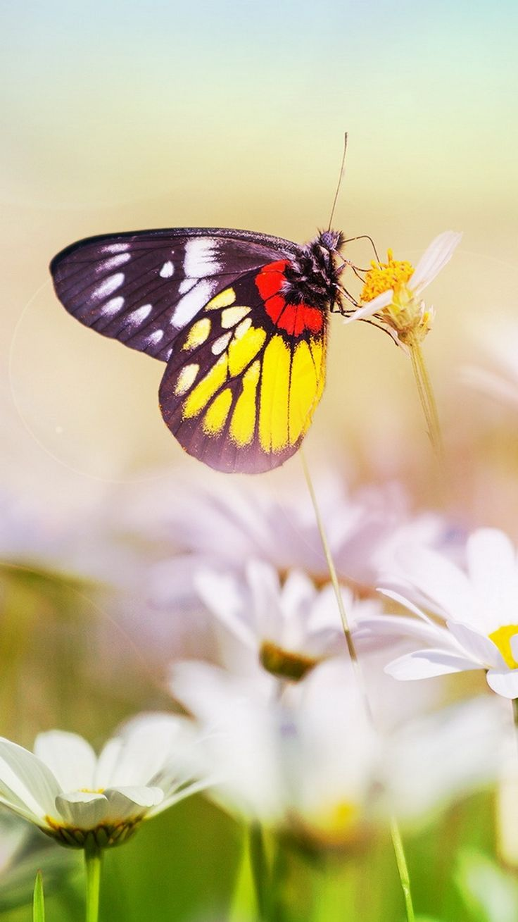 Butterfly nature insects macro zoom closeup wallpaper HD Butterfly nature insects macro zoom closeup wallpaper HD