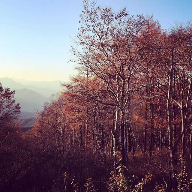【naokitashiro7】さんのInstagramをピンしています。 《山のてっぺんには冬が もうすぐそこまで来ていました  #holiday #winter #写真好きな人とつながりたい #ファインダー越しの私の世界 #view #landscape #もみじライン #travel #trip #鬼怒川 #日光 #goodevening #sky #bluesky #栃木 #カコソラ #紅葉 #mountain #forest #森 #落ち葉 #autumn #旅 #行楽 #小さい秋 #展望台 #頂上》