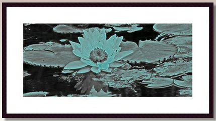 Title: Peaceful I always find water lilies to be calming.  Have relaxing artworks in your home to sooth away the days stresses.