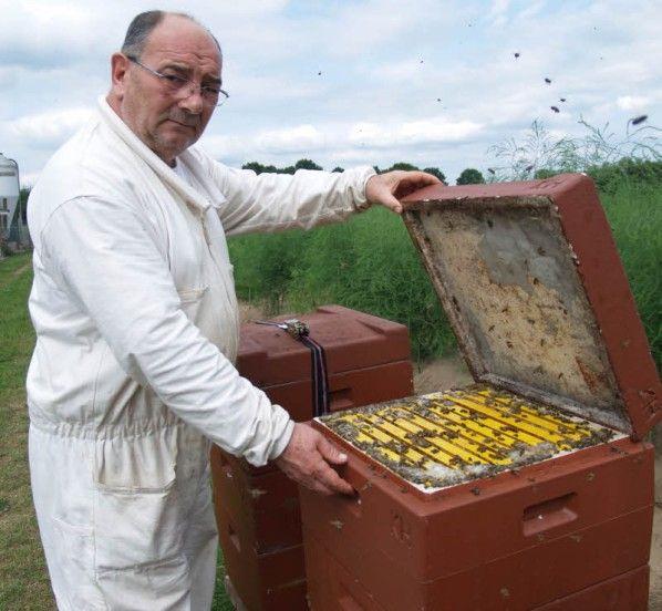 Bienenkästen mit Bauschaum verstopft - wie grausam können Menschen sein :((
