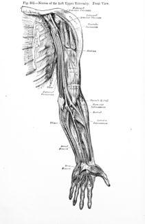 Tendinite du bras - Symptômes et traitement - Santé-Médecine