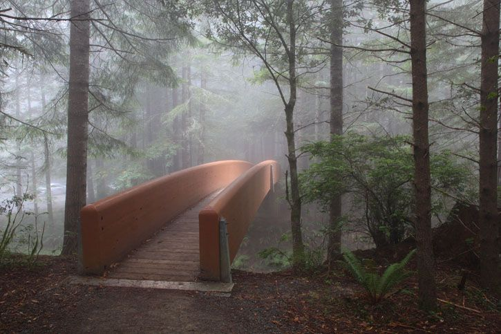 The Lady Bird Johnson Trail 1.4 miles Redwoods National Park