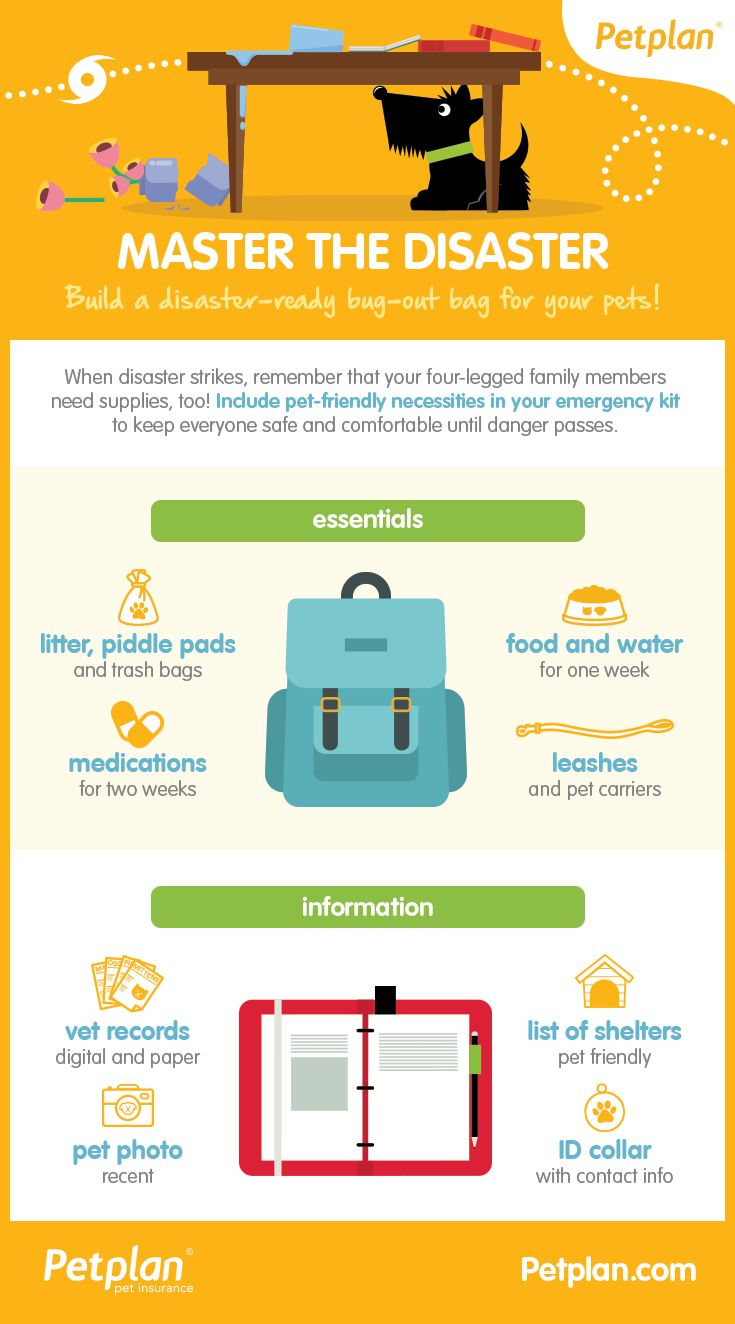 How to build a disaster-ready bug-out bag for your pets! Infographic from Petplan Pet Insurance
