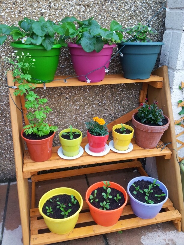 Top 23 ideas about 3 tier plant stand on pinterest for Herb stand ideas