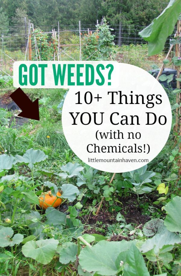 Got WEEDS? 10+ Ways to Get Rid of Weeds (with no chemicals!)