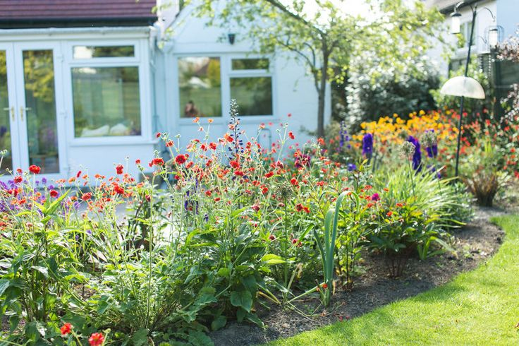 Striking scarlet geum Mrs T Bradshaw make an eye-catching show combined with delphinium Clivedon Beauty and erysimum Bowles Mauve. In the distance is another geum, rich golden Lady Stratheden.  Photo By Natasha Cadman