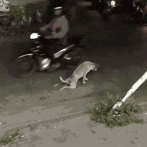21 Best GIFs Of All Time Of The Week #177 from best GOAT and Best of the Web
