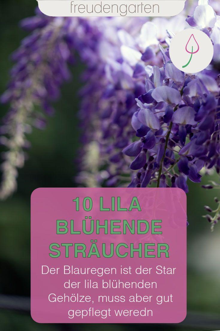 Die Schonsten Straucher Mit Lila Bluten Lila Bluten Straucher Garten Pflanzen