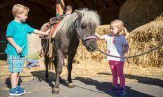 Urlaub auf dem Bauernhof Schreinerhof Schönberg Grafenau Bayerischer Wald Familien Kinder