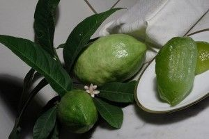 #Cedro #Candito #ItalianSweets #Citrus #buongustaiditalia #Dolci