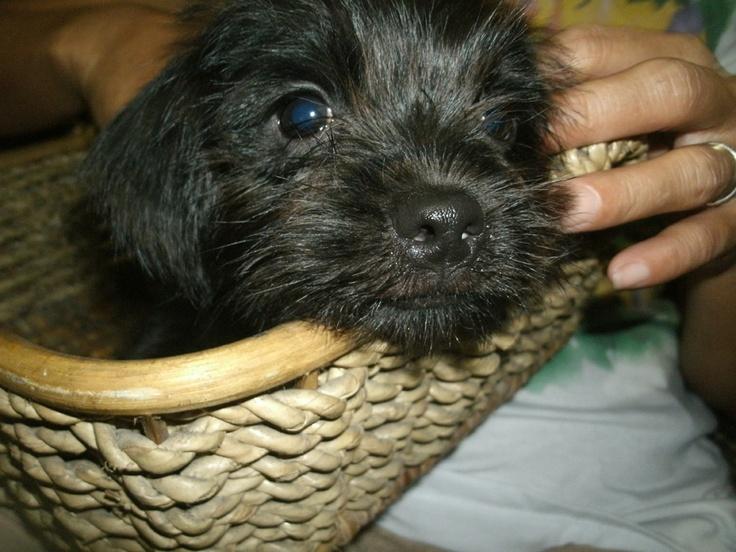 My pet Winnie