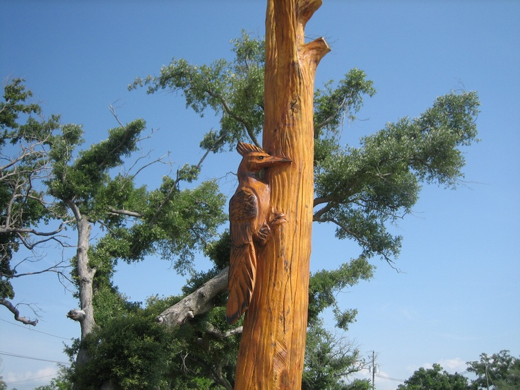 Images about katrina trees on pinterest