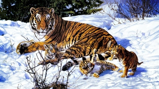 TAKE ACTION!  Help protect Siberian Tigers!  Urge Russian officials to preserve this majestic animal's natural environment so that they may safely flourish & survive for generations to come.