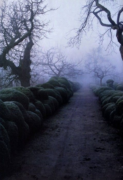 : The Roads, Magic Forests, Gardens Paths, Spooky Places, Sleepy Hollow, Dark Side, Horror Movie, Winter Gardens, Awesome Places