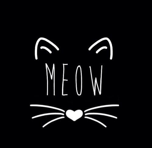 Minha maior paixão... gatos!