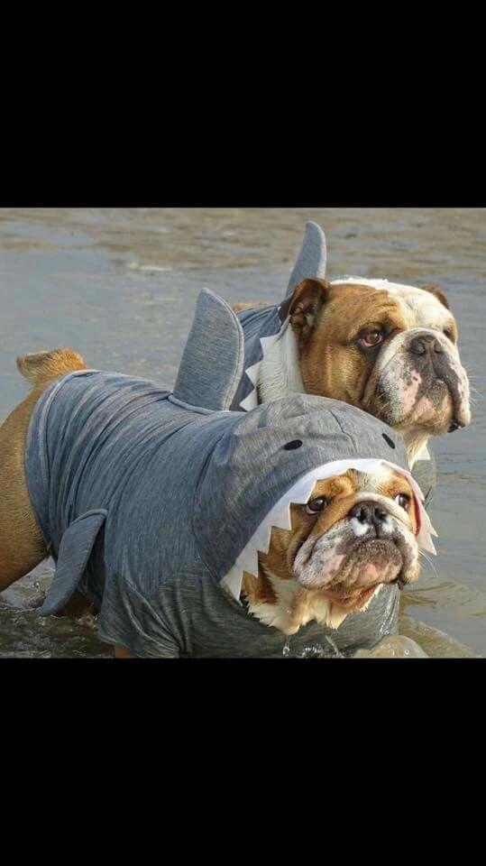 I'm doing this to Otis this Halloween!
