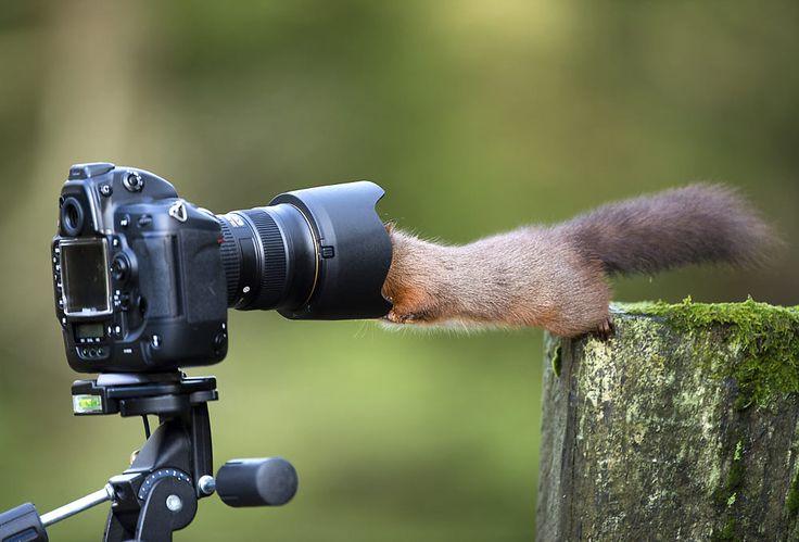 освещении зарубежные фотографы животных для самогона
