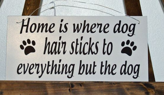 So true! Home is where the dog hair sticks to everything but the dog! - pets #signs #sayings #funny