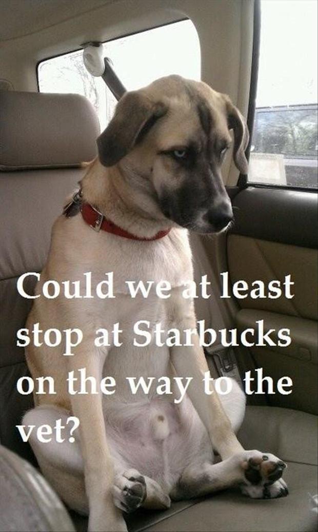Could we at least stop at Starbuck's on the way to the vet? Pyro loves his whip cream