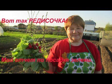 Вот так РЕДИСКА!!! Хитрый способ дал свой урожай. - YouTube