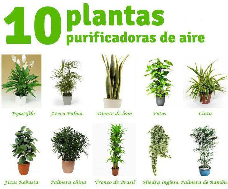 Enlace permanente de imagen incrustada http www for Ver plantas ornamentales