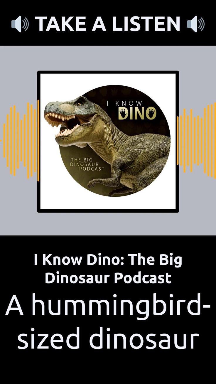 Episode 280 A hummingbirdsized dinosaur I Know Dino