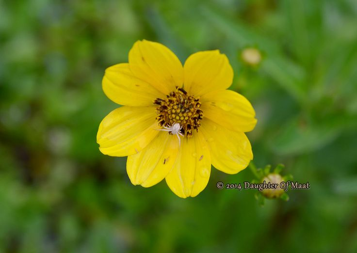 Yellow Flower Photography, Flower Photography, Nature Photography, Fine Art Photography, Yellow Flower Picture by BlueDasherPictures on Etsy