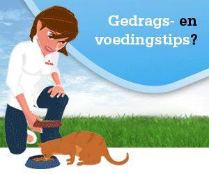 Verzorging binnenhuiskatten - Kattenplaza