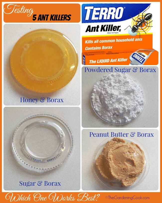 I recently test five ant killers. Find out which one works best at http://thegardeningcook.com/testing-borax-ant-killer-remedies/