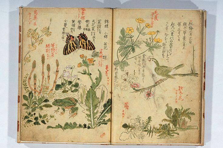 Antique Asian Nature Book