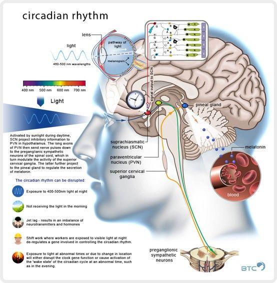 Circadian Rhythm - failure keeps us awake