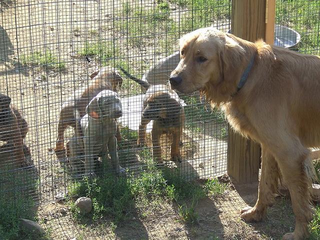 Sarasota Dog Training And Boarding Dog Training Dogs Dog