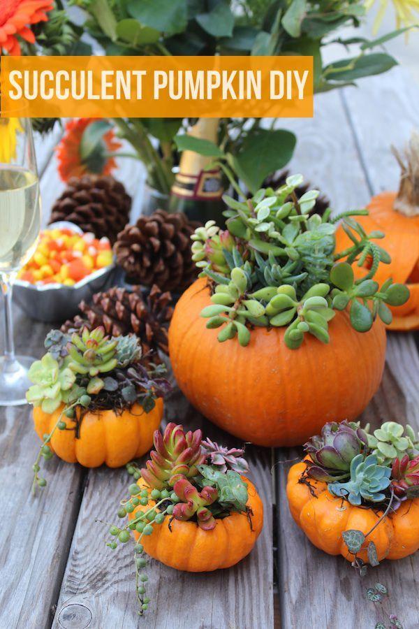 DIY Succulent Mini Pumpkin Gardens @aliciakrueger5